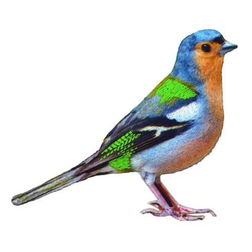 nažehlovačka vtáčik
